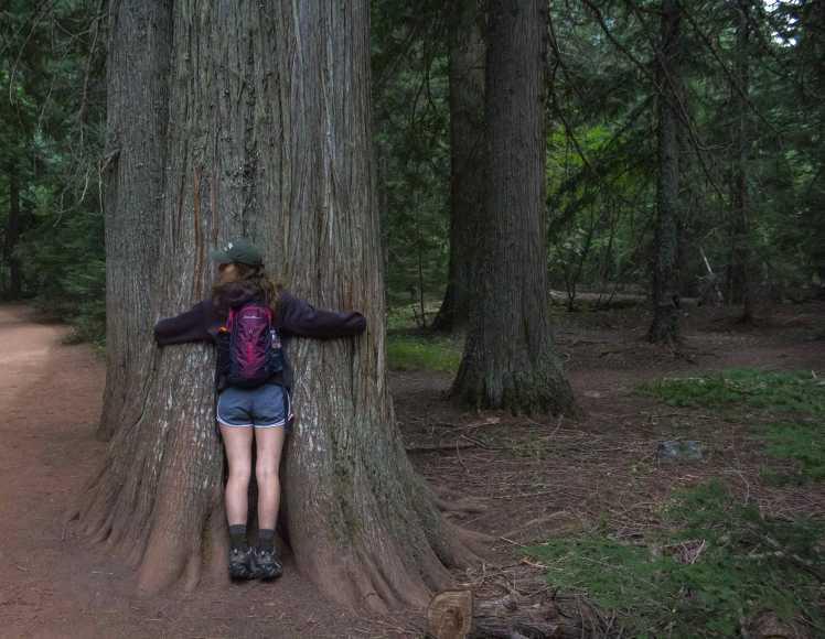 treehuggeropt