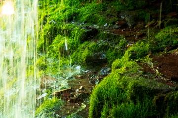 Moss at Lost Creek Falls, Cornucopia WI
