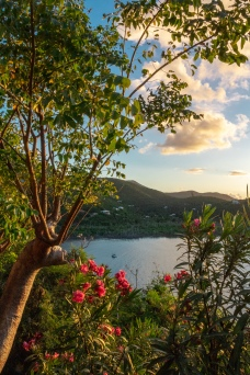 Caribbean flowers at sunrise