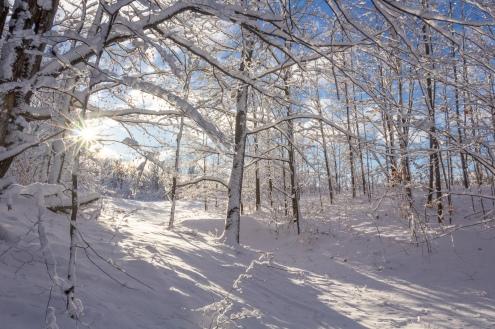 Snowy sunrise, Alden, MI