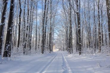 Snow covered road, Alden, MI