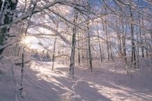 Snowy morning in Alden, Michigan